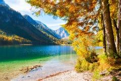 Alberi variopinti di autunno sulla riva del lago in alpi, Austria Fotografie Stock Libere da Diritti