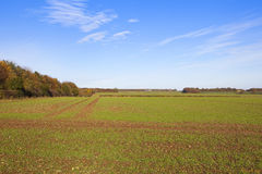 Alberi variopinti ed il raccolto del grano Fotografie Stock Libere da Diritti