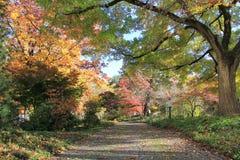 Alberi variopinti lungo la strada in autunno Fotografie Stock
