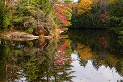 Alberi variopinti riflessi in un'acqua tranquilla Fotografia Stock