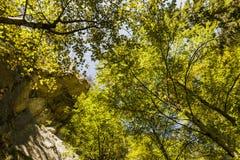 alberi veduti dal fondo alla cima Immagine Stock Libera da Diritti