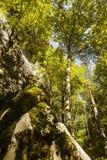 alberi veduti dal fondo alla cima Immagini Stock Libere da Diritti