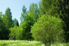 Alberi verdi in campagna Fotografia Stock