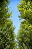Alberi verdi con il sole Fotografie Stock Libere da Diritti