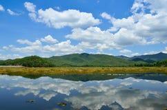 Alberi verdi dal lago un giorno pieno di sole Immagine Stock Libera da Diritti