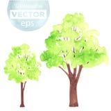 Alberi verdi dell'acquerello Fotografie Stock Libere da Diritti