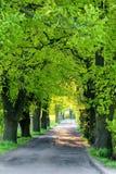Alberi verdi della molla in vicolo Immagine Stock Libera da Diritti