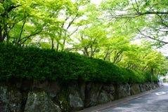 Alberi verdi di Hakone, Giappone Immagini Stock