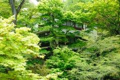 Alberi verdi di Hakone nel Giappone Fotografia Stock Libera da Diritti