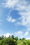 Alberi verdi e chiaro cielo Immagini Stock