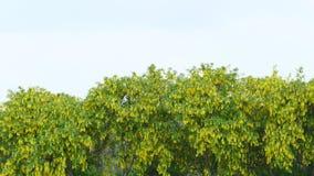 Alberi verdi e gialli Fotografia Stock Libera da Diritti