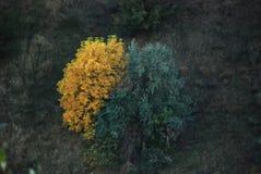 Alberi verdi e gialli Fotografia Stock