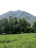 Alberi verdi e montagne verdi immagine stock libera da diritti