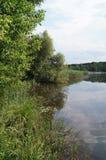 Alberi verdi ed alta erba sul lago Immagini Stock Libere da Diritti