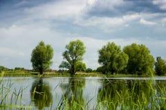 Alberi verdi sopra il lago Fotografia Stock