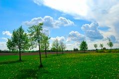 Alberi verdi su un prato del fiore, giorno luminoso, primavera, repubblica Ceca immagini stock libere da diritti