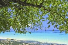 Alberi verdi sulla spiaggia. Immagine Stock Libera da Diritti