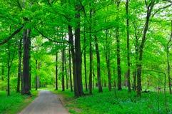 Alberi verdi in una sosta Fotografie Stock