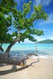 Alberi vicino alla spiaggia Immagine Stock Libera da Diritti
