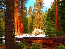 Alberi in Yosemite Fotografie Stock Libere da Diritti