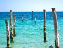 Alberini del pilastro della spiaggia con gli uccelli immagini stock