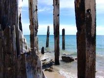 Alberini di legno Fotografie Stock