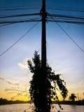 Alberino elettrico Fotografia Stock