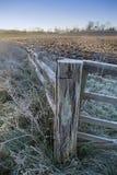 Alberino gelido del cancello Immagine Stock
