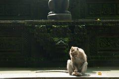 Albern Sie am anciant Tempel, Affe Forest Sanctuary, Ubud, Bali herum Lizenzfreies Stockbild