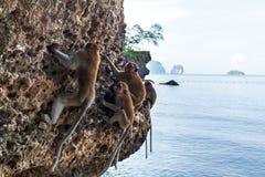 Albern Sie auf einem Felsen auf dem Strand in Thailand herum Stockbild