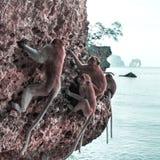 Albern Sie auf einem Felsen auf dem Strand in Thailand herum Lizenzfreie Stockfotografie