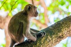 Albern Sie Bild im Profil herum, das auf einem hohen Baum sitzt Lizenzfreie Stockfotos