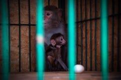 Albern Sie Blick mit kleinem Kind in einem Käfig im Zoo herum Stockfoto