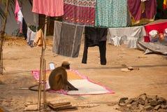 Albern Sie das Sitzen auf dem Dach des Hauses herum goa Indien Stockbilder