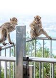 Albern Sie das Sitzen auf der Spitzenseilbahnstation von Gibraltar herum Lizenzfreies Stockfoto