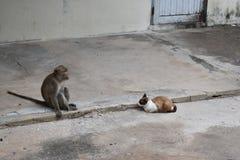Albern Sie das Sitzen auf der Straße mit von Wildkatzen in Hua Hin, Thailand herum Lizenzfreie Stockbilder