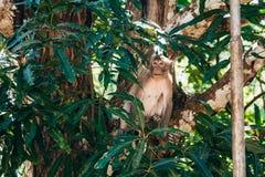 Albern Sie das Sitzen auf einem Baum im Dschungel herum Lizenzfreie Stockfotos