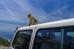 Albern Sie das Sitzen auf einem touristischen Auto während ein Bruch herum Lizenzfreies Stockbild