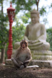 Albern Sie das Sitzen auf Gartenstein mit Statue von Buddha am Hintergrund herum Lizenzfreies Stockfoto