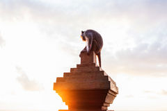 Albern Sie das Sitzen auf konkreter Säule mit Aufflackern gegen Sonnenuntergang herum Lizenzfreie Stockfotografie