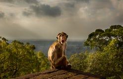 Albern Sie das Sitzen auf Sigiriya-Felsen über Regenwald in Sri Lanka herum Stockbilder