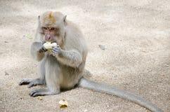 Albern Sie das Sitzen herum, aus den Grund, zum der Banane zu essen Lizenzfreies Stockbild
