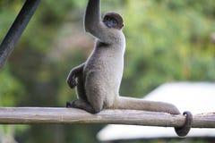 Albern Sie das Sitzen im Freienpark, Manaus, Brasilien herum Stockfoto