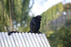 Albern Sie das Sitzen im Freienpark, Manaus, Brasilien herum Lizenzfreies Stockbild