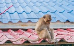 Albern Sie das Sitzen traurig und deprimiert auf dem Dach herum Stockfoto