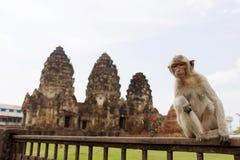 Albern Sie das Sitzen vor Wat Phra Prang Sam Yot-Tempel, Lopburi, Thailand herum Lizenzfreie Stockfotografie