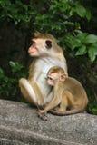 Albern Sie in der natürlichen Einstellung mit junger Mutter mit Baby herum Stockfotos