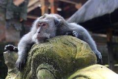 Albern Sie die Entspannung auf einer Statue am heiligen Affe-Wald herum Lizenzfreies Stockfoto