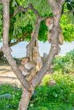 Albern Sie die Familie herum, die auf einem Baum in einem Dschungel auf einer Strandseeansicht sitzt Lizenzfreie Stockfotografie