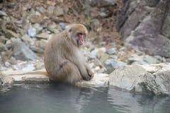 Albern Sie in einem natürlichen onsen (heiße Quelle) herum, gefunden im Jigokudani-Affe-Park oder im Schnee-Affen Stockbild